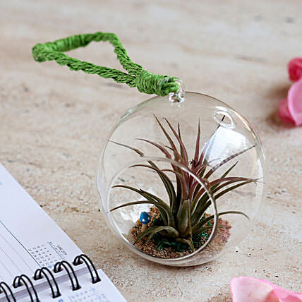 Tilandsia Air Plant in Glass Globe: Send Gifts to Krishnagiri