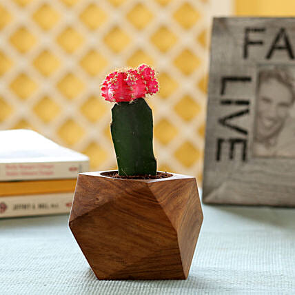 Moon Cactus In Sheesham Wood Planter: Ornamental Plant Gifts