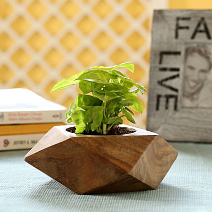 Syngonium Plant In Sheesham Wood Planter: Ornamental Plant Gifts