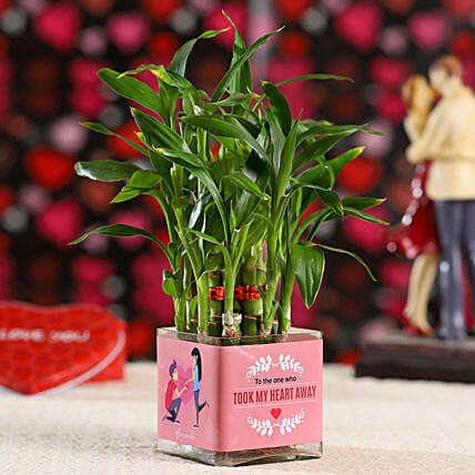 2 Layer Bamboo Plant For Propose Day: Plants Delivery