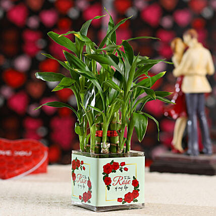 2 Layer Bamboo Plant For Rose Day: Gifts for Rose Day