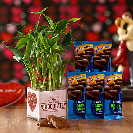 Bamboo Plant & LuvIt Chocolates: Gifts to Karnal