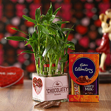 Chocolate Day Special Bamboo Plant Combo: Lucky Bamboo Plants
