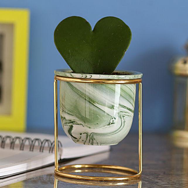 Hoya Plant In Ceramic Grey Pot: Send Shrubs