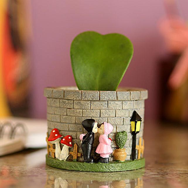 Hoya Plant In Ceramic Grey Pot: Pots for Plants