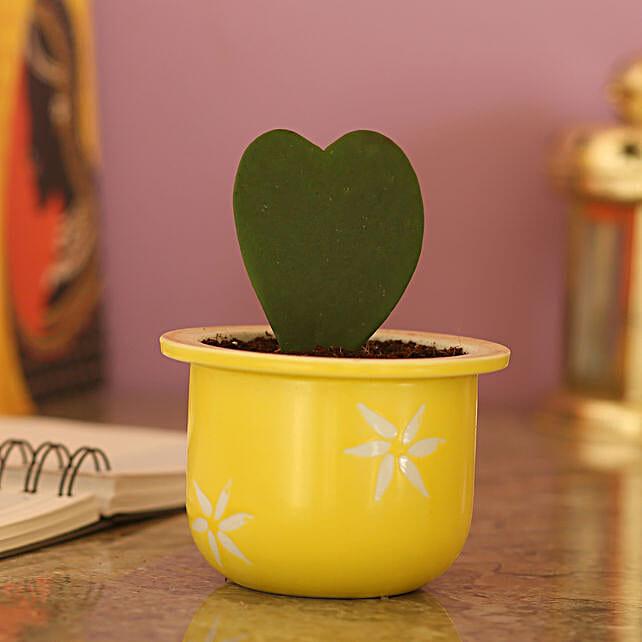 Hoya Plant In Ceramic Yellow Pot: