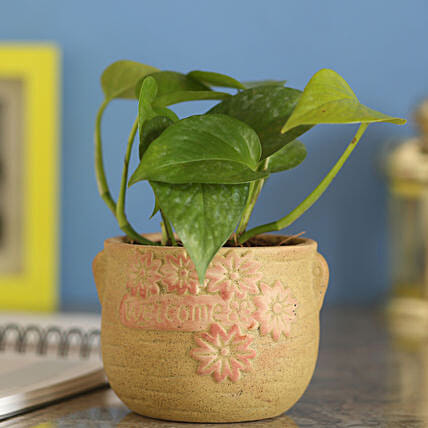 Money Plant In Brown Ceramic Pot: Propose Day Gifts