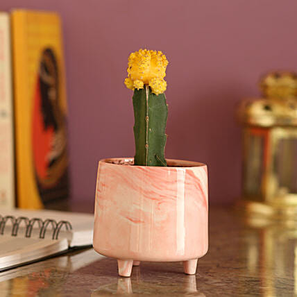 Yellow Moon Cactus In Pink Pot: Send Gifts to Balaghat