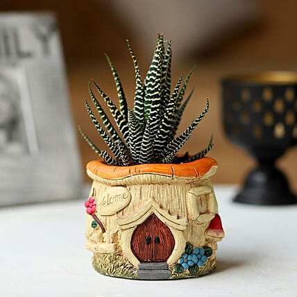 Haworthia Plant in Small Pot: Rare Plants