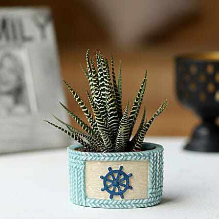 Haworthia Plant in Wheel Pot: Rare Plant Gifts