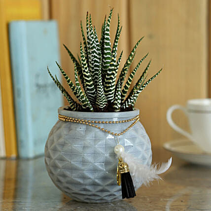 Haworthia Zebra in Glass Pot: Best Outdoor Plant