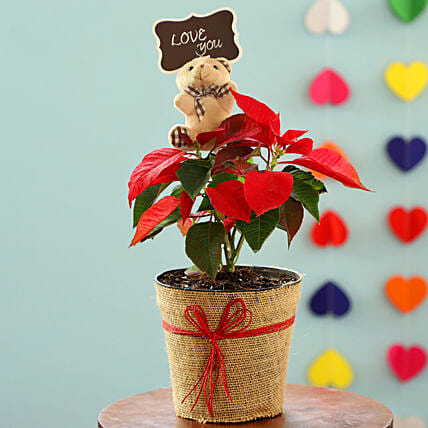 Red Poinsettia Plant Teddy Day Combo: