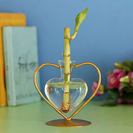 Bamboo Stick In Heart Frame: Lucky Bamboo Plants