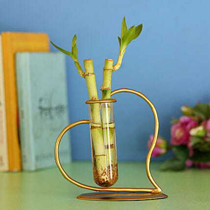 Bamboo Sticks In Heart Frame: Bamboo Plants
