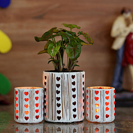 Chamaedorea Plant & Red Hearts Votive Holder: Good Luck Plants