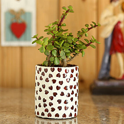 Jade Plant In White Hearts Mosaic Planter: Home Decor Gifts Ideas