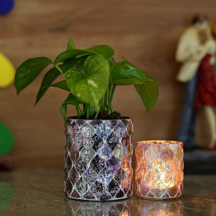 Money Plant & Diamond Cut Votive Holder: Pohela Boishakh Gifts