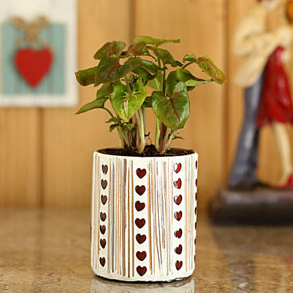 Syngonium Plant In Red Hearts Mosaic Planter: Pohela Boishakh Gifts
