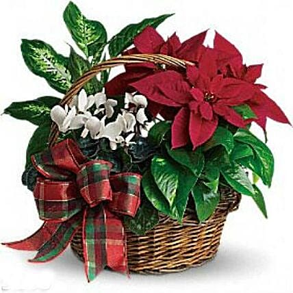 Christmas Special Decorated Plant: Christmas Gift Delivery Philippines
