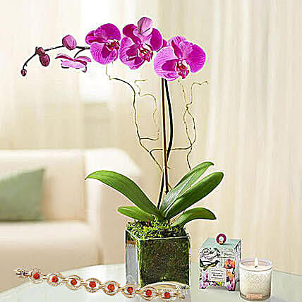 Purple Orchid Plant In Glass Vase With Rakhi: Rakhi With Plants to Singapore