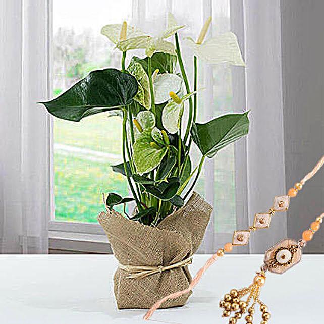 White Anthurium Jute Wrapped Potted Plant With Rakhi: Rakhi With Plants to Singapore