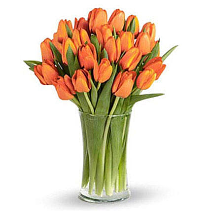 Orange Tulip Collection:
