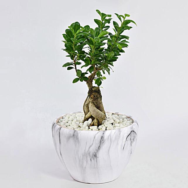 Bonsai Plant In Green Pot: Best Seller Gifts for Dubai