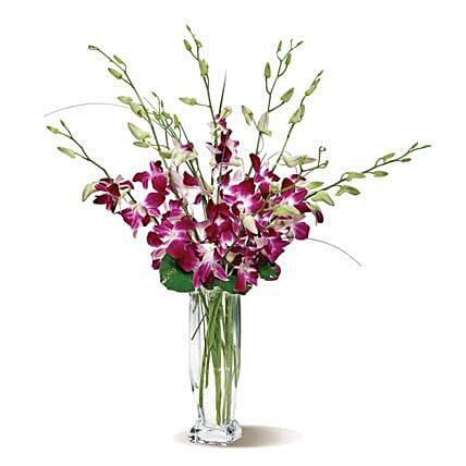 Dendrobium Orchids: Send Orchid Flowers to USA