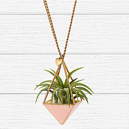 Blush Airplant Necklace: Plants in USA