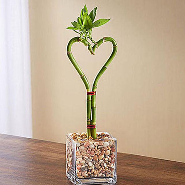Sweet Heart Bamboo: