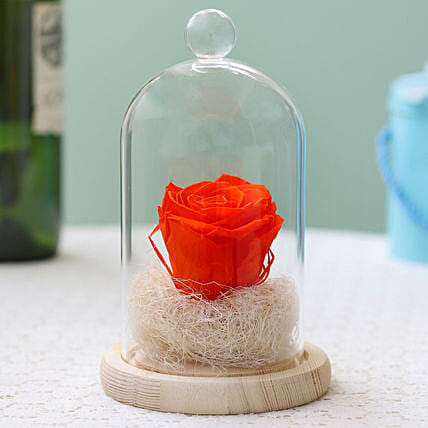 Orange Flame Forever Rose in Glass Dome: