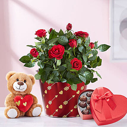 Heartfelt Love Rose Plant With Teddy: Birthday Combos to USA