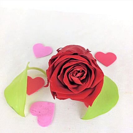Romantic Red Forever Rose: Send Roses to USA