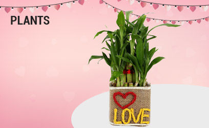 Plants for Anniversary online