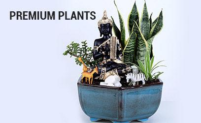premium-plants