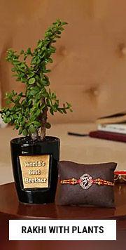 Bestseller Plants