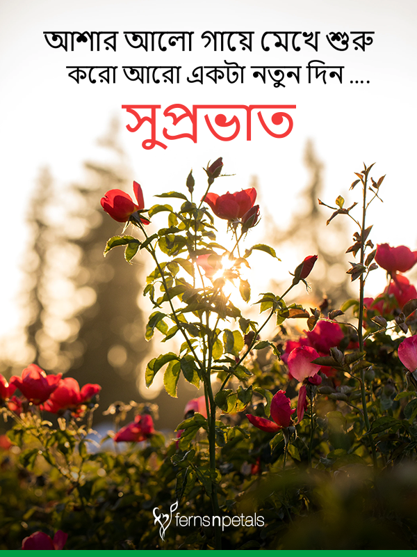 best images of good morning wishes in bengali