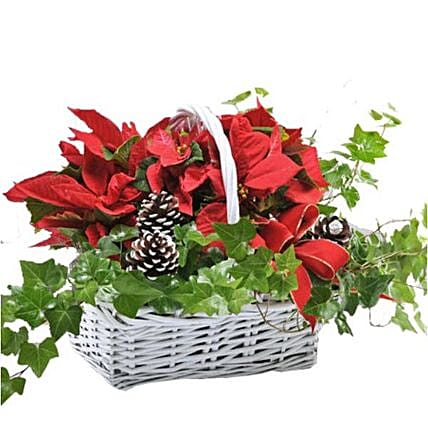 Beautiful Christmas Plant Basket
