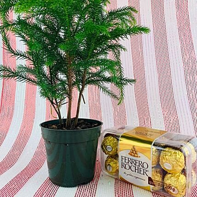 Christmas Chocolate And Mini Pine Tree:Christmas Gifts to Canada