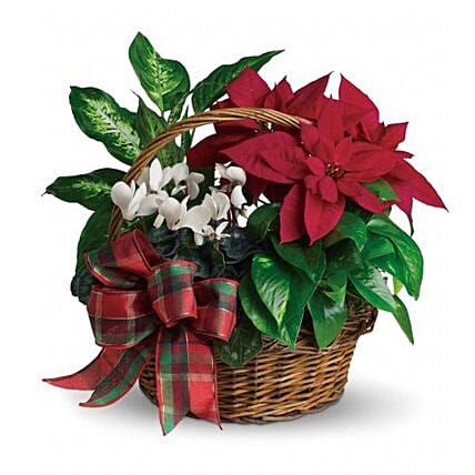 Christmas Poinsettia Tropical Basket