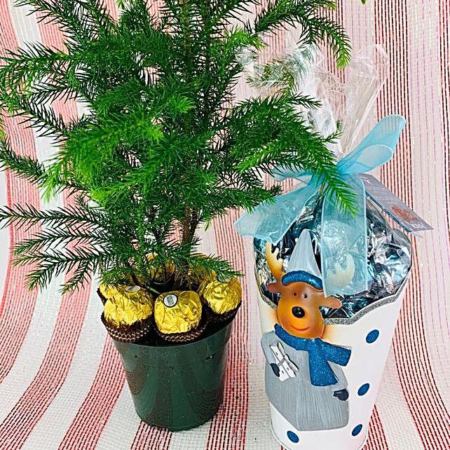 Xmas Pine Plant And Chocolate Surprise