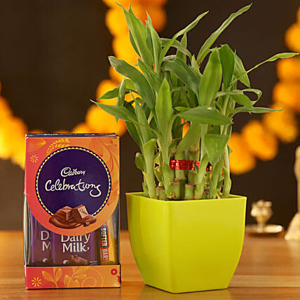 2 Layer Bamboo & Cadbury Celebrations Box:Plastic Planters