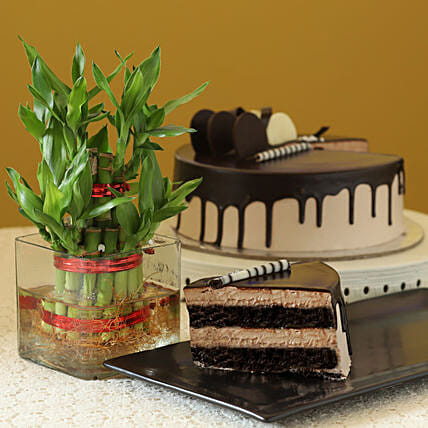 Online Cake With Bamboo Plant