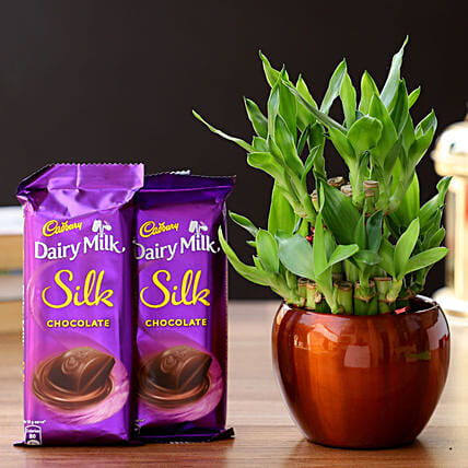 2 Layer Bamboo In Brass Pot & Cadbury Chocolates:Chocolate Combos
