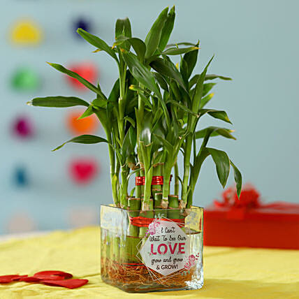 Online Valentine's Day Bamboo Plant