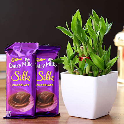 2 Layer Bamboo Plant & Dairy Milk Silk Chocolates