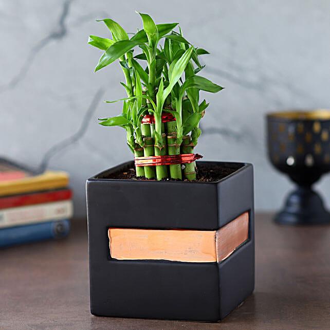 2 Layer Bamboo Plant In Black Orange Square Pot