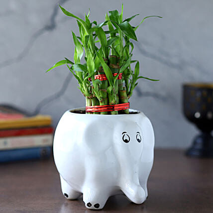 2 Layer Bamboo Plant In Elephant Ceramic Pot:Bamboo Plants