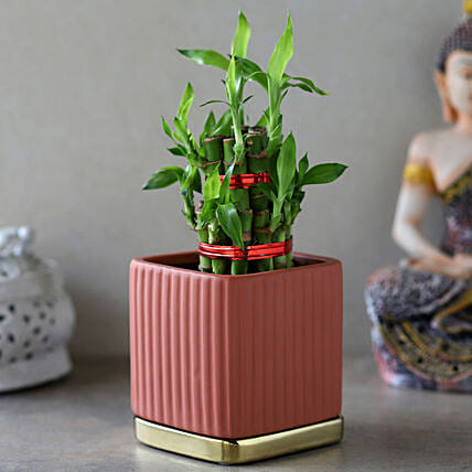 2 Layer Bamboo Plant In Mauve Gold Plate Pot