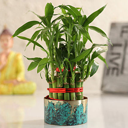 plant for table decor